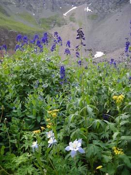 BLflowers